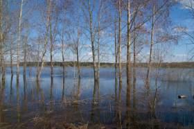 Весна. Река Вятка. Половодье., polov-6391