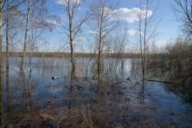 Весна. Река Вятка. Половодье., polov-6392