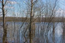 Весна. Река Вятка. Половодье., polov-6393