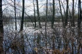Весна. Река Вятка. Половодье., polov-6402