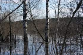 Весна. Река Вятка. Половодье., polov-6404