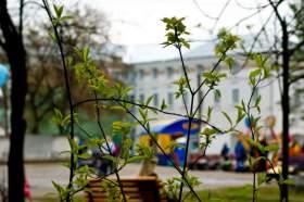 Александровский парк, alpark-06721