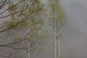 Весна 2012. Половодье, polov-06760