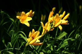 Ботанический сад. Цветы, Ботанический сад. Цветы