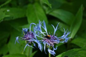 Ботанический сад. Цветы