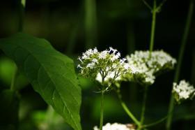Ботанический сад. Цветы, botan-08258