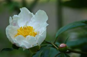 Ботанический сад. Цветы, botan-08261