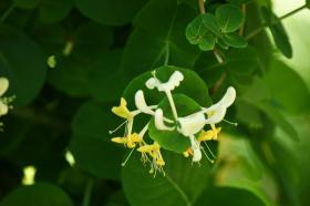 Ботанический сад. Цветы, botan-08262