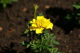 Ботанический сад. Цветы, botan-08266