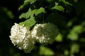 Ботанический сад. Цветы, botan-08267