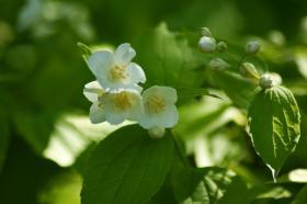 Ботанический сад. Цветы, botan-08273