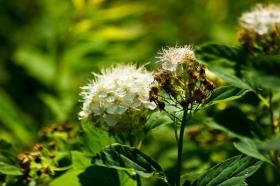 Ботанический сад. Цветы, botan-08276