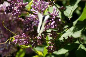 Ботанический сад. Цветы, botan-08277
