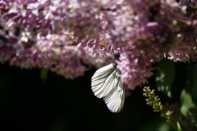 Ботанический сад. Цветы, botan-08278