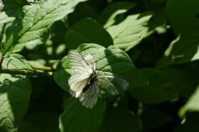 Ботанический сад. Цветы, botan-08281
