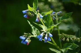 Ботанический сад. Цветы, botan-08286