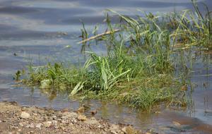 Фотопрогулка. Бывший порт. Река Вятка, vyatka-09120