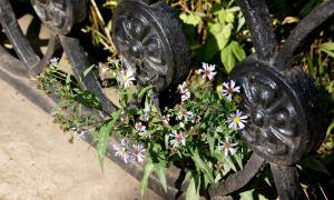 Цветы во дворе, Цветы во дворе