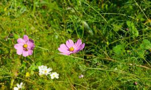 Цветы во дворе, dvor-04988