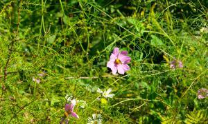 Цветы во дворе, dvor-04990