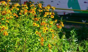 Цветы во дворе, dvor-04991
