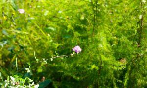 Цветы во дворе, dvor-04992