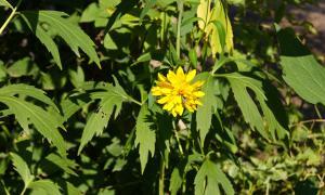Цветы во дворе, dvor-04994