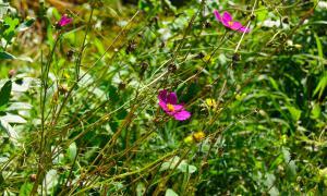 Цветы во дворе, dvor-04996