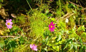 Цветы во дворе, dvor-04997