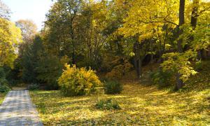 Осенние зарисовки, botan-00398