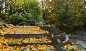 Осенние зарисовки, botan-00409