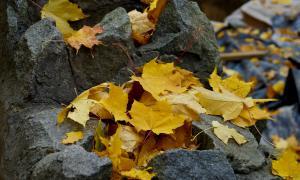 Осенние зарисовки, botan-00411