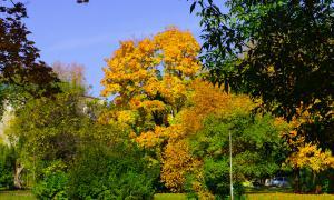 Осенние зарисовки, Осенние зарисовки