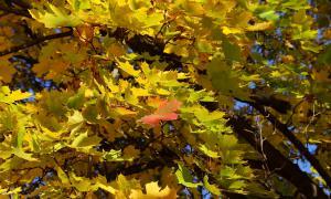 Осенние зарисовки, osen-00148