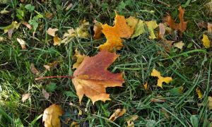 Осенние зарисовки, osen-00149