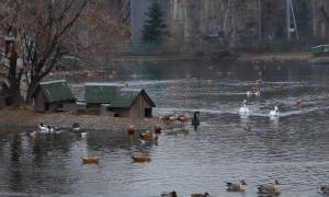 Московский зоопарк, soo-01833