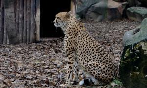 Московский зоопарк, soo-01846