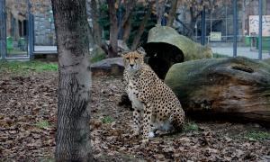 Московский зоопарк, soo-01849