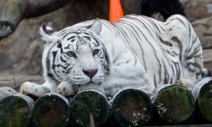 Московский зоопарк, soo-01851