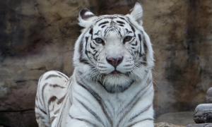 Московский зоопарк, soo-01858