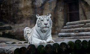Московский зоопарк, soo-01863