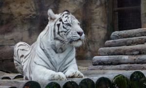 Московский зоопарк, soo-01864
