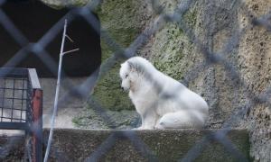 Московский зоопарк, soo-01866