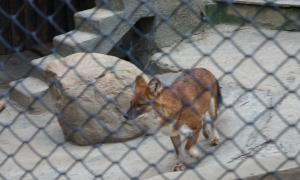 Московский зоопарк, soo-01871