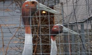 Московский зоопарк, soo-01888