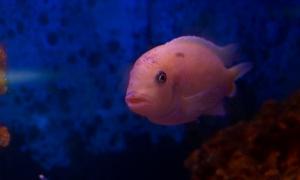 Аквариумные рыбки, Аквариумные рыбки