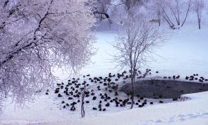 Вятка. Зима. Пруд у цирка, Вятка. Зима. Пруд у цирка