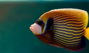Экзотические рыбы, Экзотические рыбы