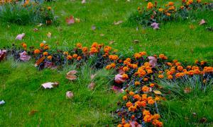 Осень. Ботанический сад, botsad-001