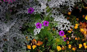 Осень. Ботанический сад, botsad-002